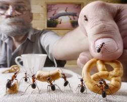 Ants traps