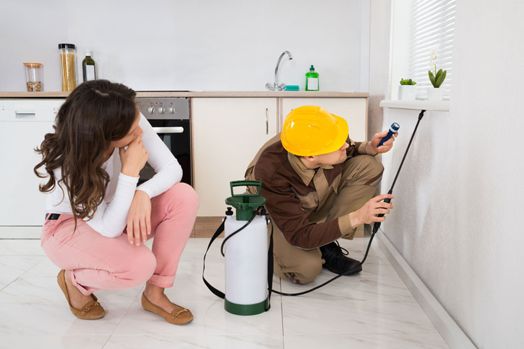 Worker Spraying Insecticide Under The Windowsill In Kitchen