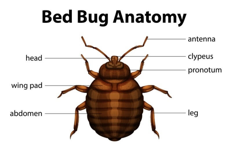Six Facts You Didn't Know About Bed Bugs
