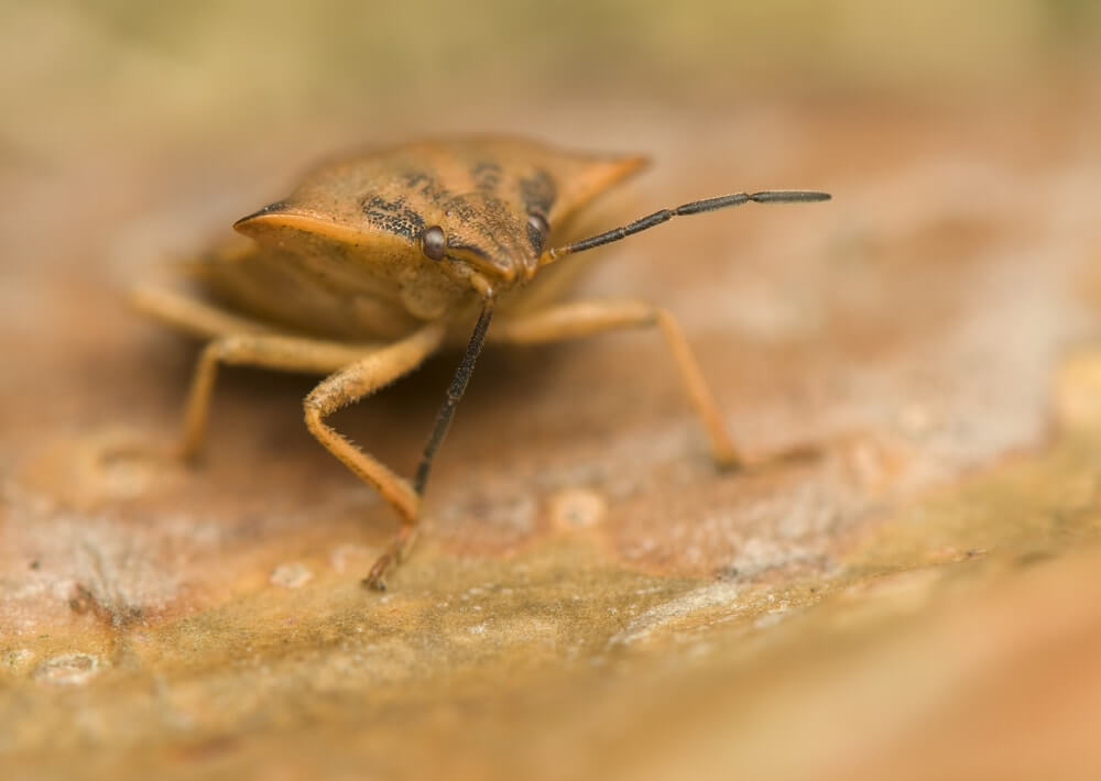 how do you know if you have bed bugs 5 signs. Black Bedroom Furniture Sets. Home Design Ideas
