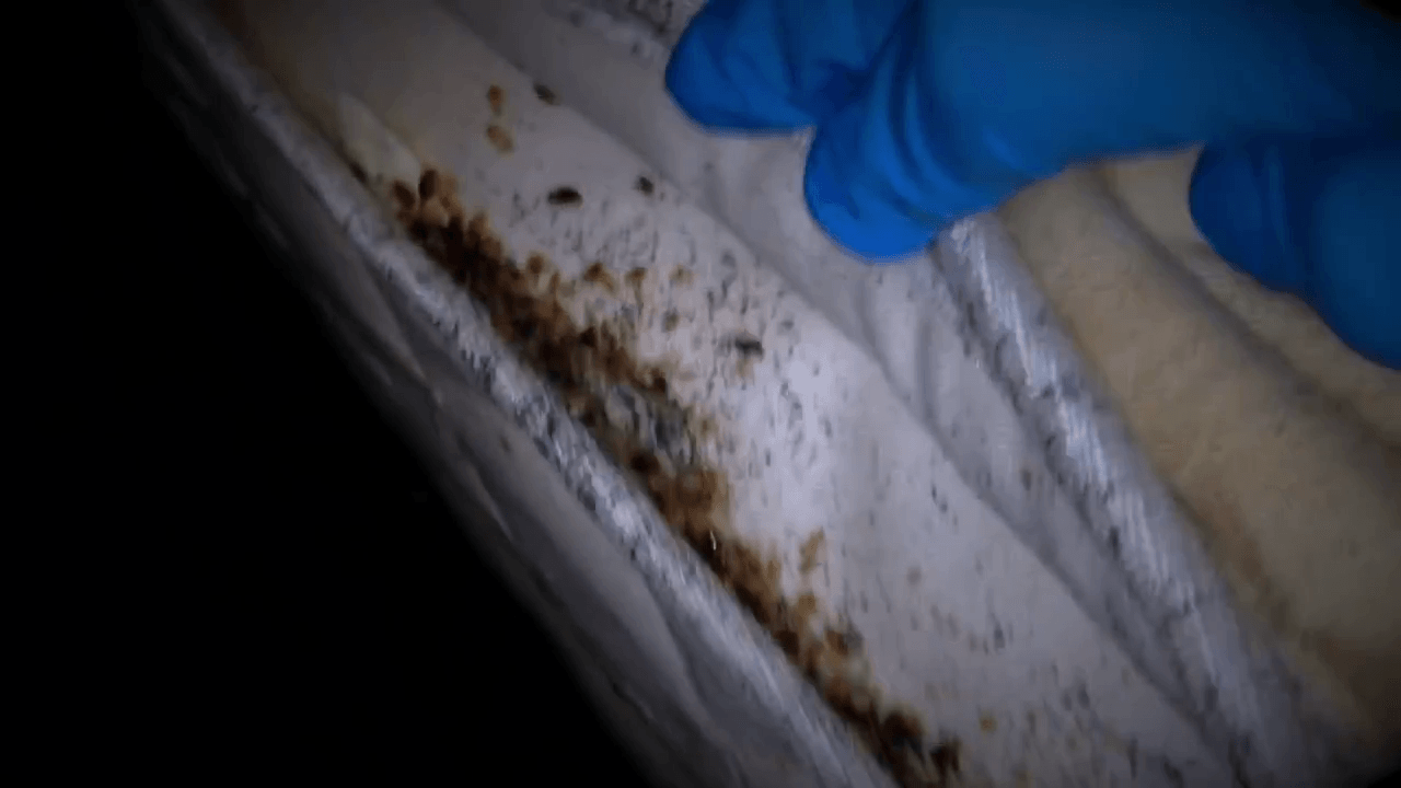 How Do You Know If You Have Bed Bugs 5 Signs