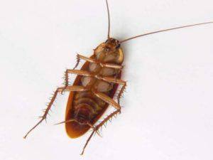 A cockroach has 6 legs