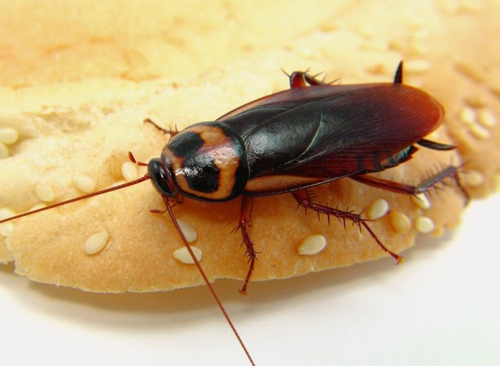 Homemade Roach Traps Easy Ways To Eliminate Roach Infestation