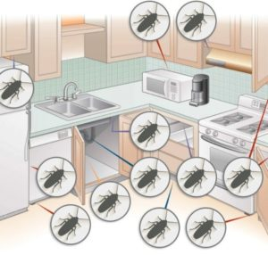 Place traps where cockroaches often appear.