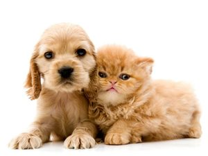 fleas on puppies and kittens
