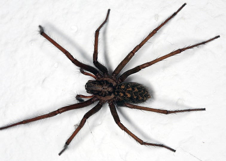 What does a spider bite look like pictures and symptoms for What does a garden spider look like