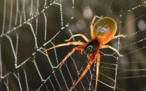 orange spider on black web