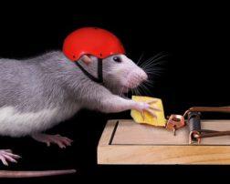 how to kill rats