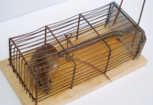 5 successful tricks how to kill rats