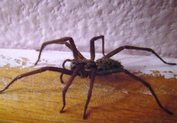 5 effective tips how to get rid of house spider all you for How to get rid of spiders in the house uk