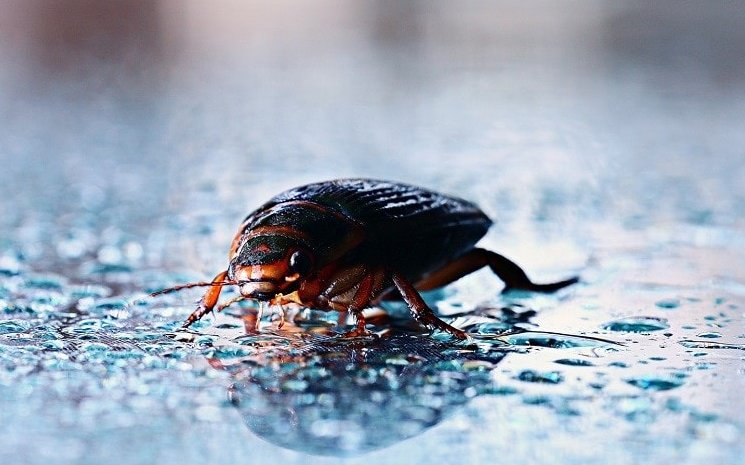 How To Spot A Giant Water Bug From A Cockroach 10 Tips
