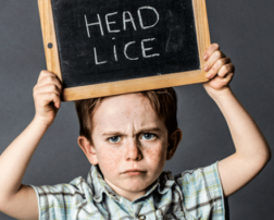 what do lice look like